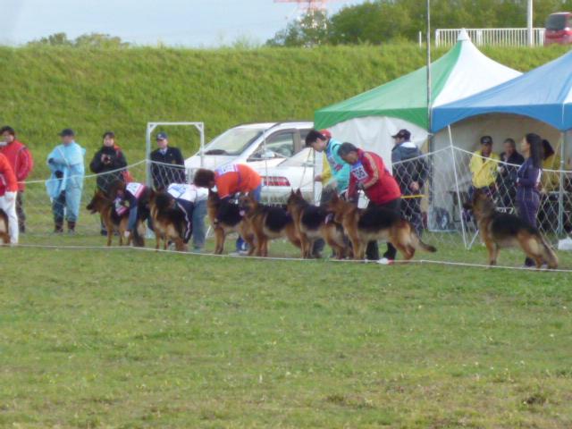 警察犬 010