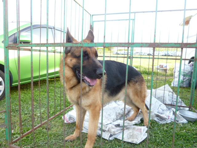 警察犬 020