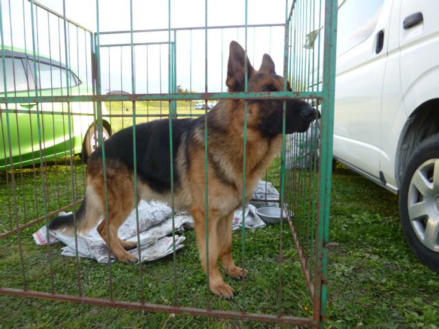 警察犬 019
