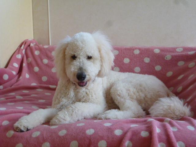 洗犬~散歩~48 052