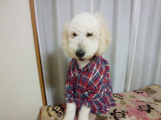洗犬~散歩~48 076
