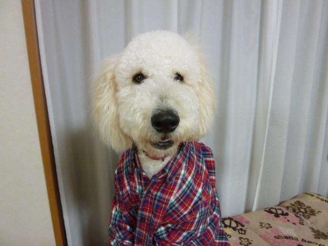 洗犬~散歩~48 079