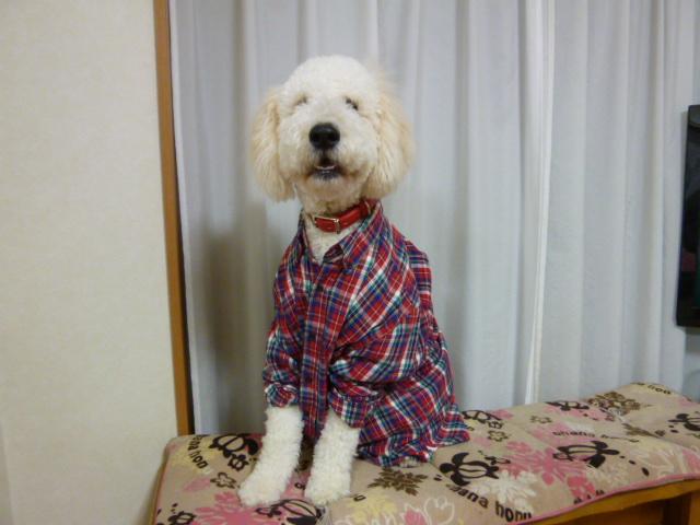 洗犬~散歩~48 080