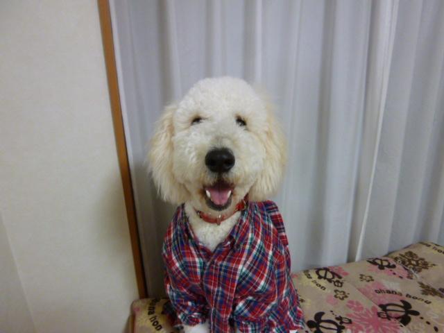 洗犬~散歩~48 081