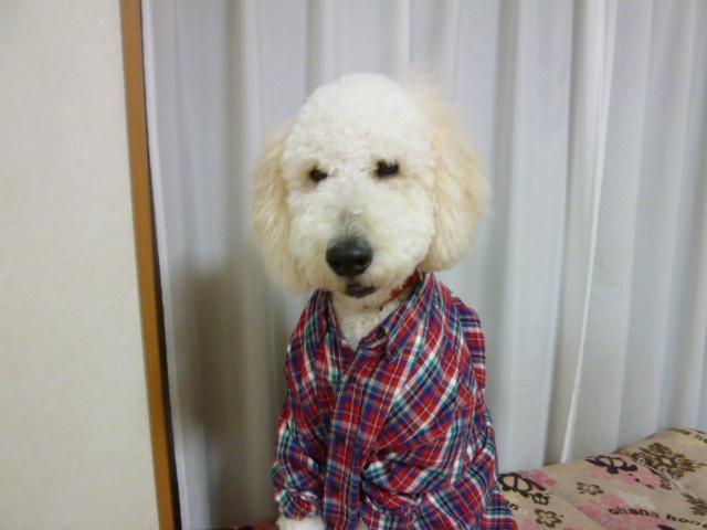 洗犬~散歩~48 077