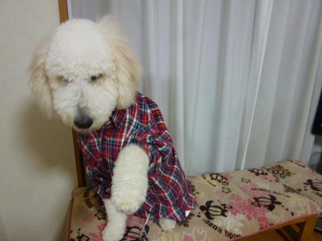 洗犬~散歩~48 082