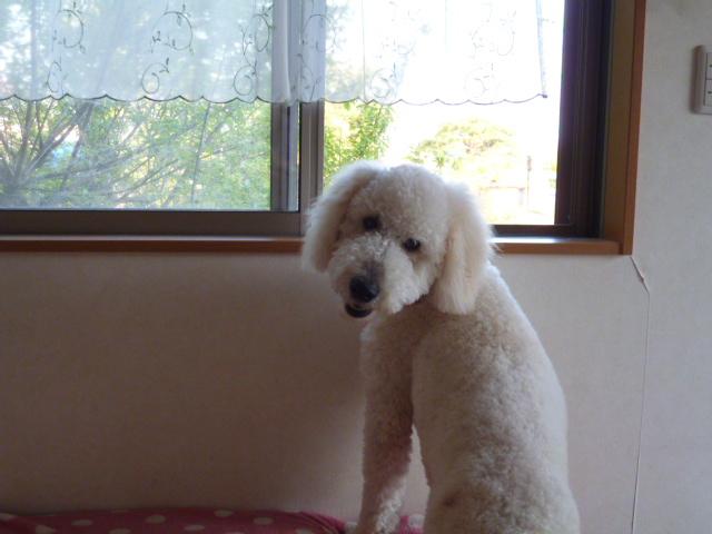 洗犬~散歩~48 058