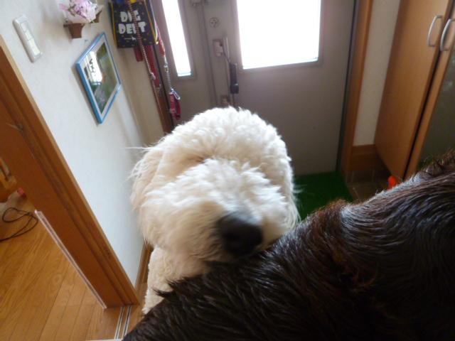 洗犬~散歩~48 005
