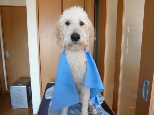洗犬~散歩~48 015