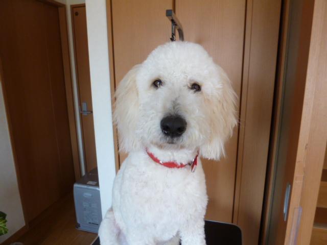 洗犬~散歩~48 018