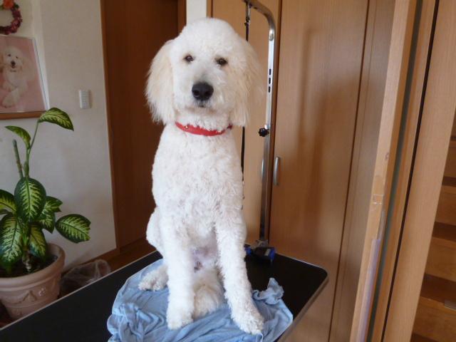 洗犬~散歩~48 021