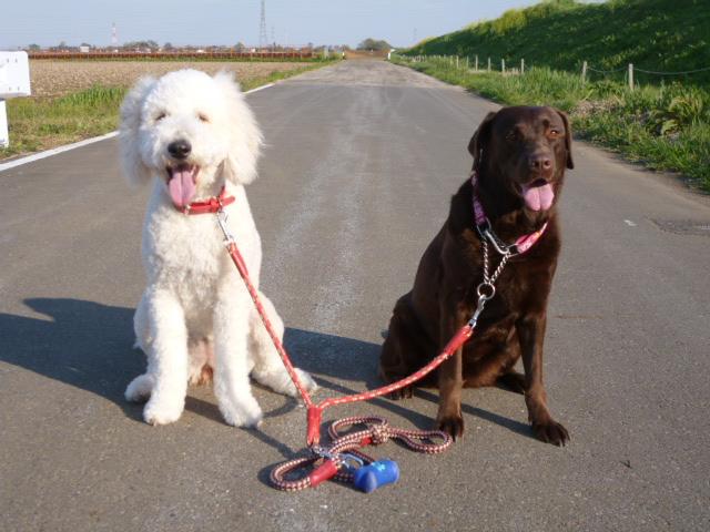 洗犬~散歩~48 035