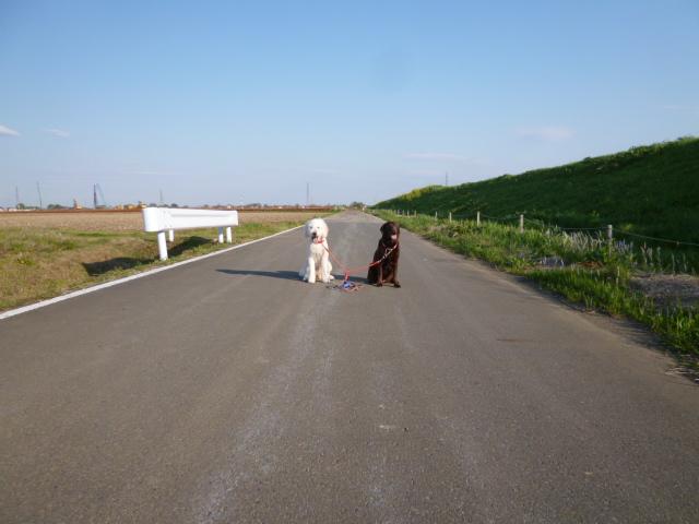 洗犬~散歩~48 036