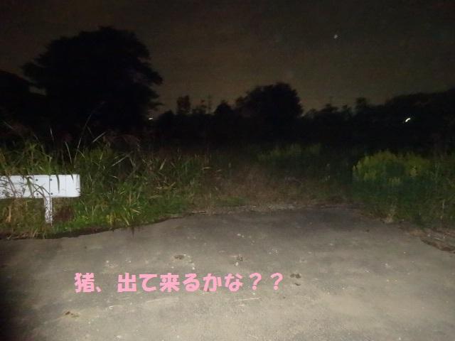 いのしし 009