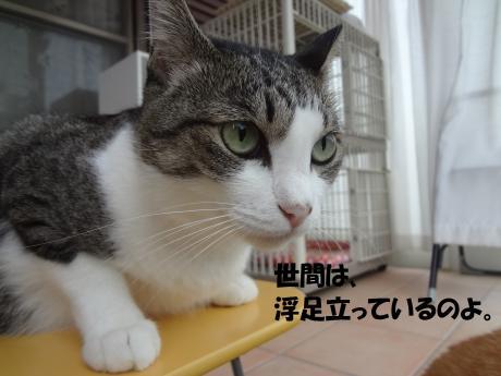 DSC01872荳夜俣_convert_20120916124436