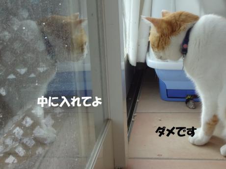 DSC02101荳ュ縺ォ_convert_20120918124500