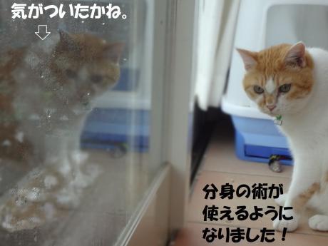 DSC02109蛻・コォ縺ョ陦点convert_20120918124545
