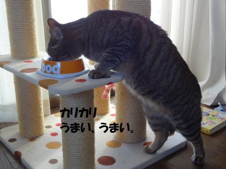 DSC02333繧ォ繝ェ繧ォ繝ェ_convert_20120929205301