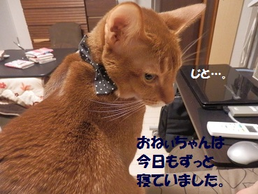 PC153202.jpg