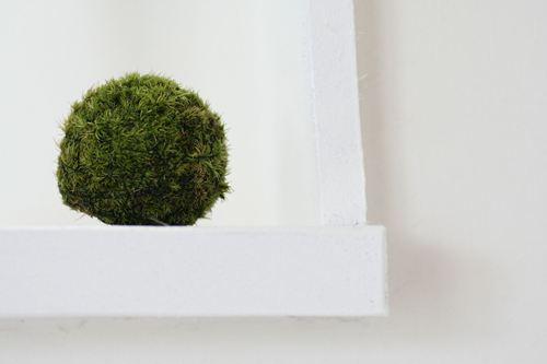 岩見沢 盆栽アトリエ 草つ月