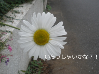 P5040378.jpg