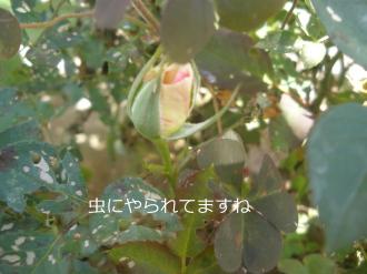 P5050380.jpg