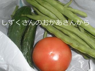 P7090282.jpg
