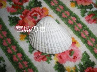 P9050083.jpg