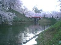 blog_sakura12_01.jpg