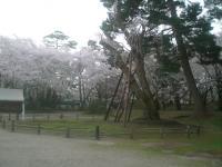 blog_sakura12_02.jpg