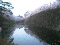 blog_sakura12_03.jpg