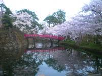 blog_sakura12_04.jpg