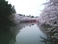 blog_sakura12_06.jpg