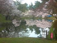blog_sakura12_07.jpg