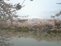 blog_sakura12_08.jpg