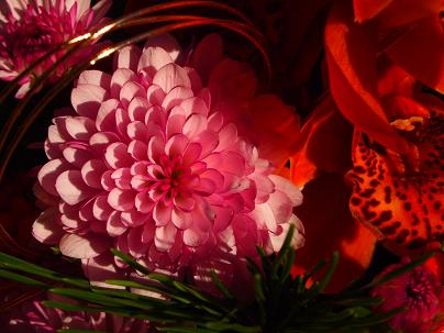 和花2012-2
