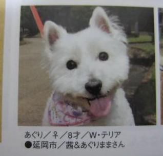 犬吉猫吉1