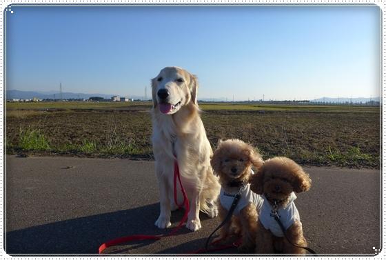 2014,11,19お散歩1