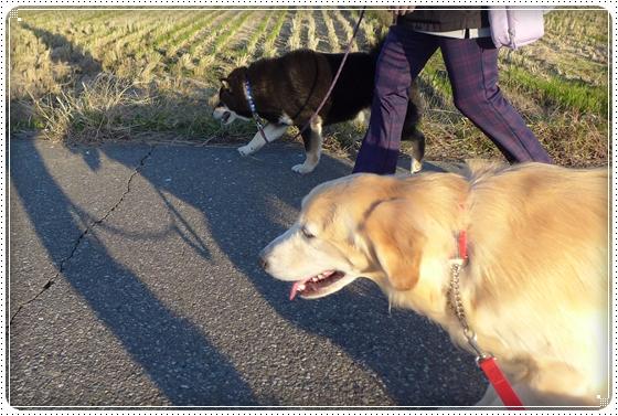 2014,11,19お散歩10