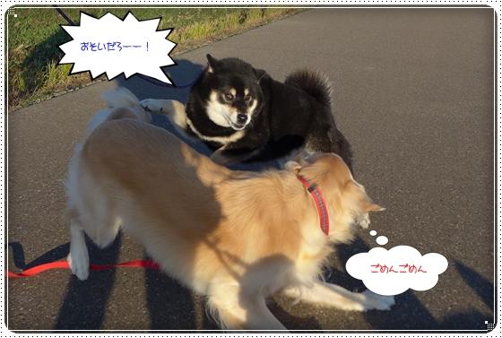 2014,11,19お散歩7