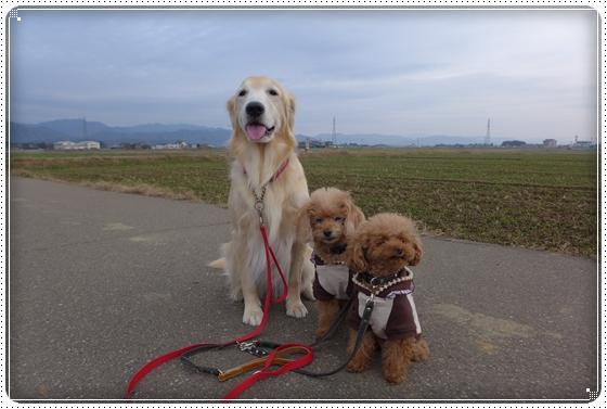 2014,11,24お散歩1