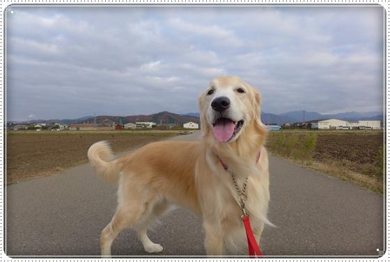 2014,11,27お散歩3