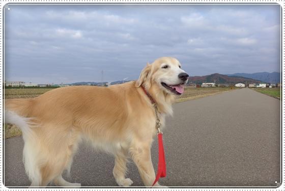 2014,11,27お散歩2