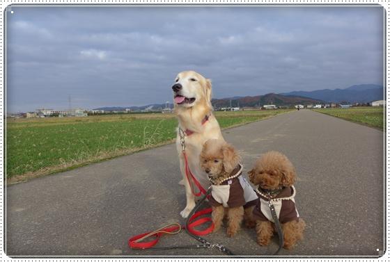 2014,11,27お散歩1