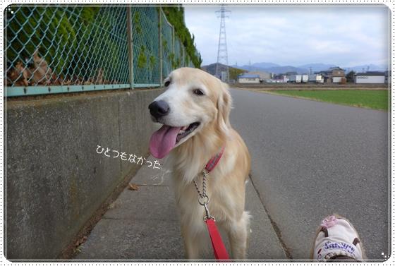 2014,11,27お散歩7