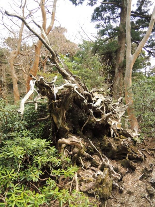 yakushima2 193