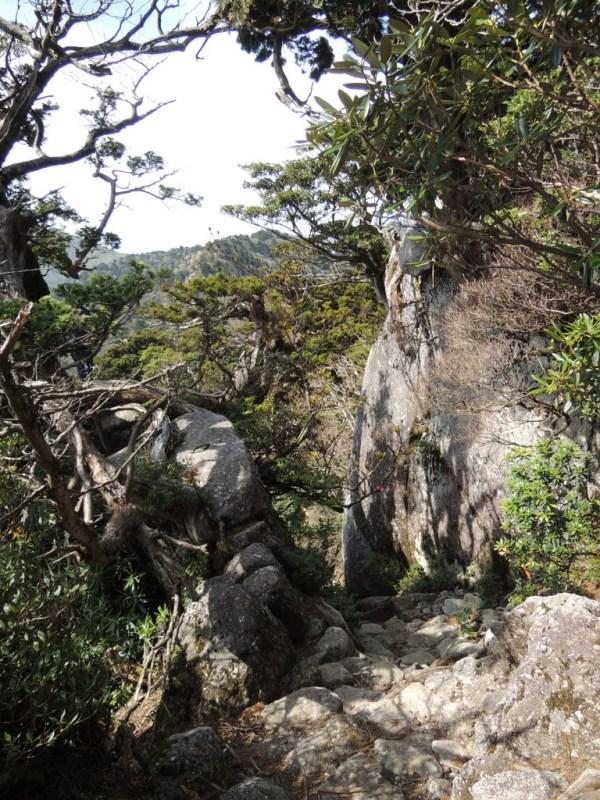 yakushima2 166