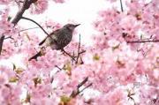 光と愛の感謝日記 4月京都出張対面セッションのご案内