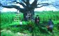 八重の桜④
