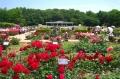 神代植物園・ばら園